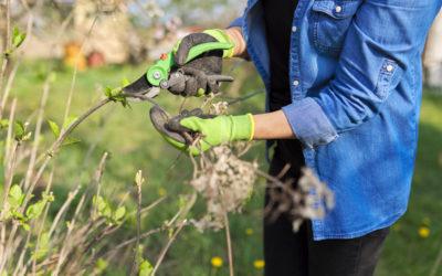 Découvrez les gestes du jardinier pour préparer l'arrivée du printemps !