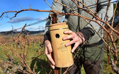 Laudun : Nouvelles méthodes viticoles pour Maison SINNAE