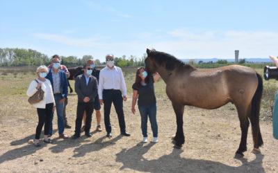 Le Garn / Codolet: des chevaux pour profiter d'un terrain clôturé