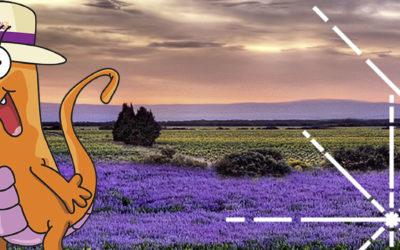 Provence Occitane: un été riche en événements !